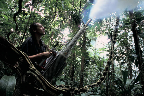 Jurgen Schmidl fogs the forest understory with insecticide to help in the collection of specimens.
