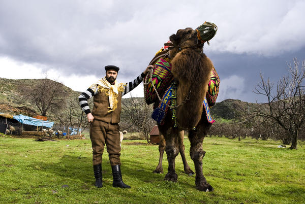 """Ismail Egilmez shows off his prize camel, Cilgin Hasan, the day before his championship bout. In the winter, Ismail spends over six hours a day with Cilgin. """"My camel is like my son,"""" he said."""