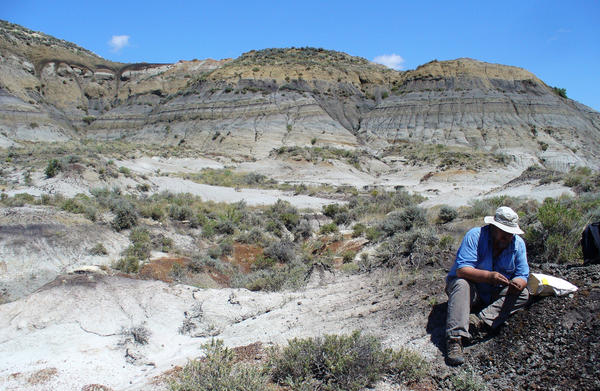 Geochronologist Paul Renne collects 66-million-year-old volcanic ash from a coal bed near Hell Creek, Mont.