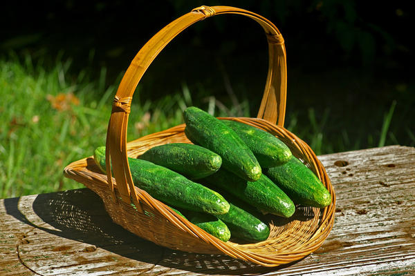 Cucumbers sculpted and carved from styrofoam for display at George Washington's first summer White House, Deshler-Morris House, in Philadelphia.