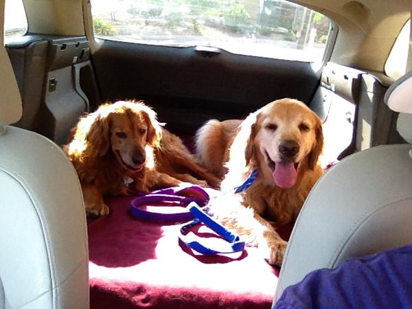 """""""Zoey (left) and Gus (right) have NPR as the soundtrack to their life. Pictured here, we're listening to Weekend Edition on our way to the dog park. We support several NPR stations (KTEP, KRWG, KCCU and WBEZ), but here, we're listening to KTEP 88.5 in El Paso, TX."""""""