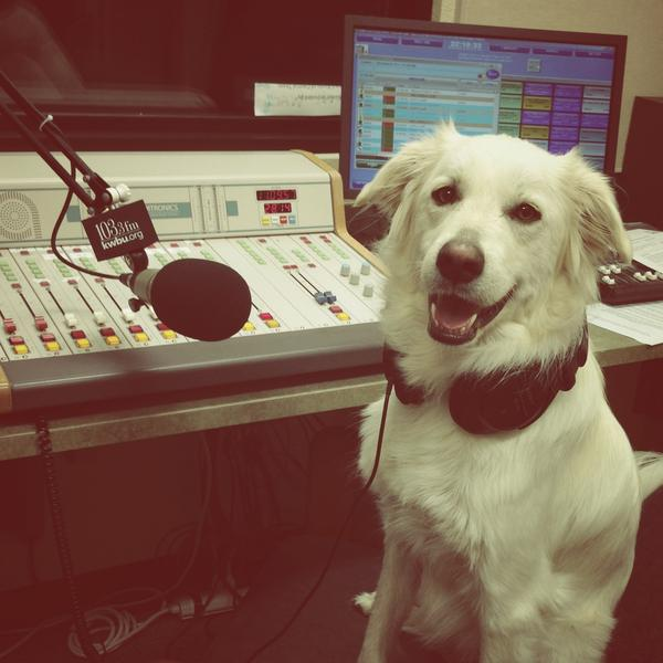 """""""Evie loves that her owner is an NPR member so she can guest host all her favorite shows! KWBU FM in Waco [Texas] is Evie's NPR!"""""""