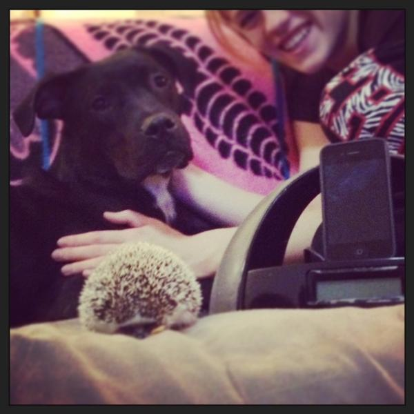 """""""Penelope the hedgehog and Bogart the news-hungry pup make for a unique pairing of pets. Both are avid fans of Washington D.C.'s NPR station 88.5 WAMU though, and they refuse to listen to anything else when getting ready for a work day or during sleepy weekend mornings."""""""