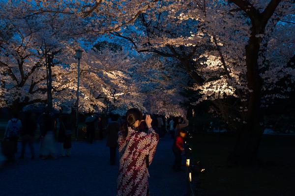 Hanami (flower viewing), Sakura (Cherry Blossom Festival), Nijo Castle, Kyoto, Japan