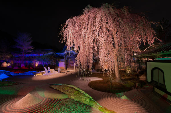 Sakura, Dry Garden, Kodaiji Temple, Kyoto, Japan