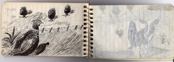 A peek inside one of Prosek's childhood notebooks.