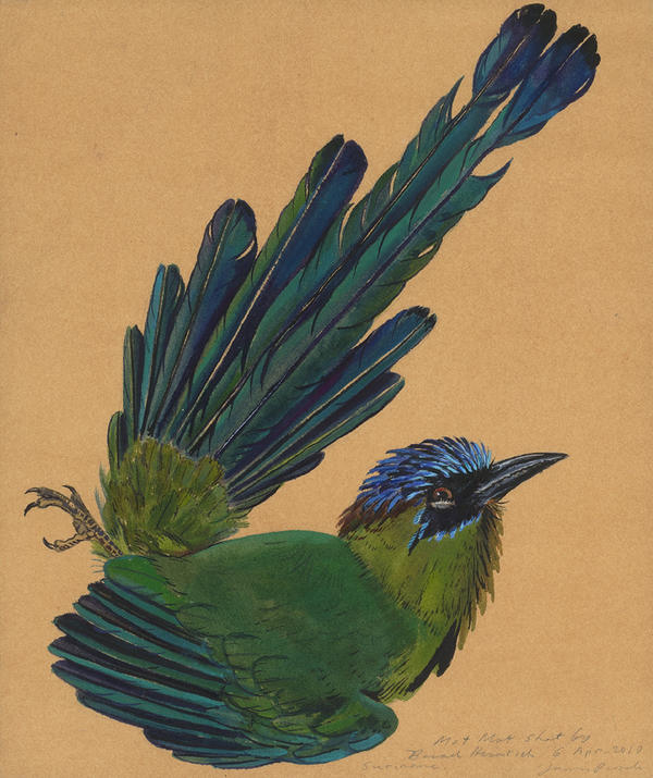 <em>Motmot</em> is a watercolor Prosek painted in the field on a 2010 collecting trip to a previously unexplored region in Suriname with the Yale Peabody Museum of Natural History.
