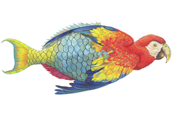 "<em>Parrotfishe</em> is one of James Prosek's ""hybrid paintings."" Created in 2005, the image is a ""commentary on how we name nature. This creature, a parrotfish, became its name in protest of being named."""