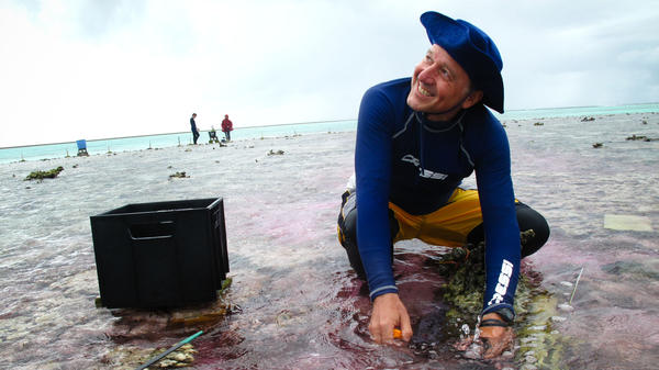 Ken Caldeira of the Carnegie Institution for Science takes a water sample during his experiment out on part of the Great Barrier Reef. The water is slightly pink because his team is using a dye to trace an acid-neutralizing chemical as it flows across the reef.