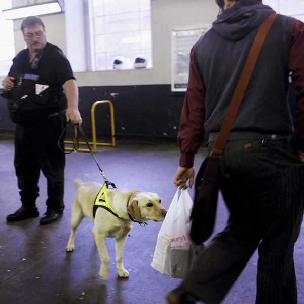 "A drug-sniffing dog checks for illegal substances at a London train station in 2007. British police are now issuing ""scratch and sniff"" marijuana cards in hopes of educating the public on the smell of cannabis plants."