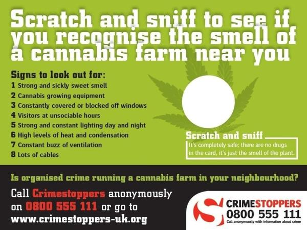 British police and the volunteer group Crimestoppers are sending out more than 200,000 of these cards with the scent of a cannabis plant.