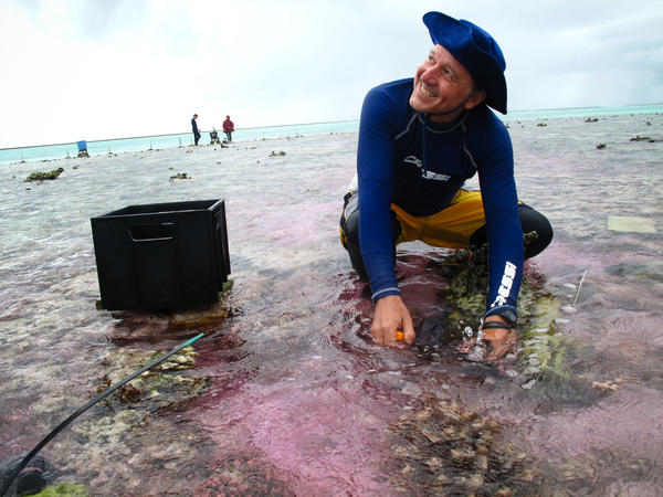 Ken Caldeira of the Carnegie Institution for Science takes a water sample during his experiment on part of the Great Barrier Reef. The water is slightly pink because his team is using a dye to trace an acid-neutralizing chemical as it flows across the reef.
