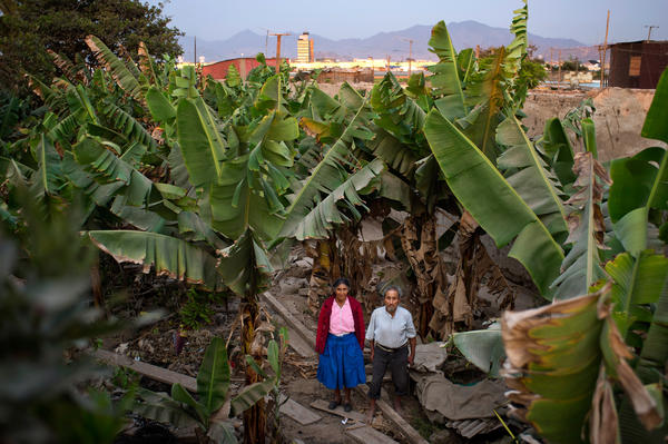 Victoria Chavez de Gutierrez and her husband, Esteban Gutierrez Loayza, have lived in El Ayllu for 50 years. The couple, their children and grandchildren lived on a property that spanned an entire block. In the rear of the property was a field of banana trees that the family harvested and ate. The main terminal of Jorge Chavez International Airport can be seen behind the field.