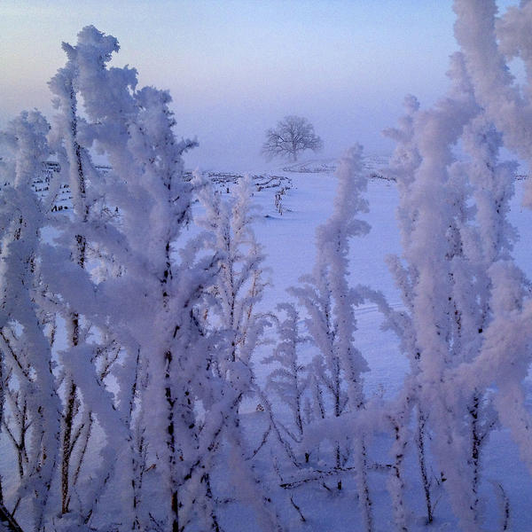 """Feb. 6, 2013. Like a scene from the land of fairy, """"That Tree"""" rises ethereal from the enchanted mists with hoarfrost encrusting the landscape."""
