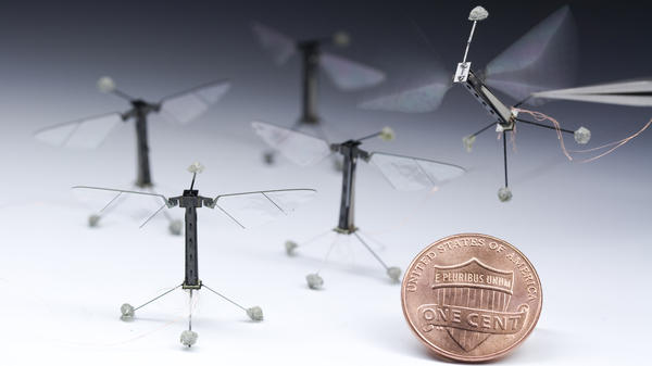 These robotic flies, which were built in a Harvard lab, can flap their wings independently of each other and fly around while tethered to a power and control wire.