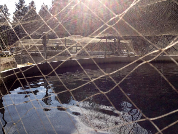 A view of one of Willowfield's land-locked sockeye tanks.