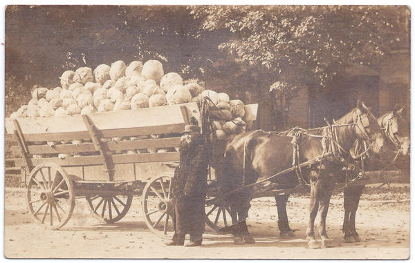Fifty-three-hundred pounds of drumhead cabbage on its way to sauerkraut near Roaring Spring in Morrisons Cove, Blair County, Pa., Oct. 17, 1912.