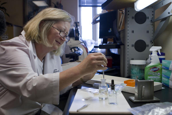 Feather forensic expert Carla Dove makes a slide of a partially digested bird feather taken from the autopsy of a Burmese python in Florida's Everglades National Park. Park officials mailed the stomach contents of eight pythons to Dove's lab at the Smithsonian Museum of Natural History so she could identify the types of birds the pythons had eaten.