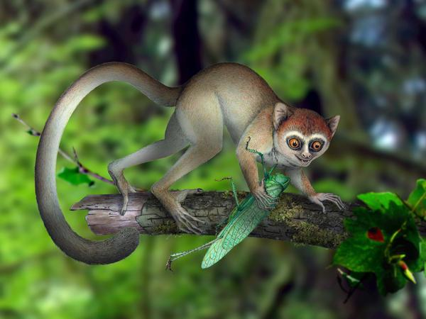 Artistic reconstruction of <em>Archicebus achilles</em> in its natural habitat of trees.