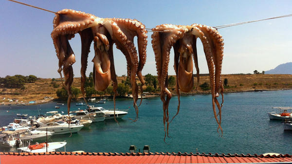 For octopus flesh to be tender enough to grill, it must be dried in the sun at least one full day.