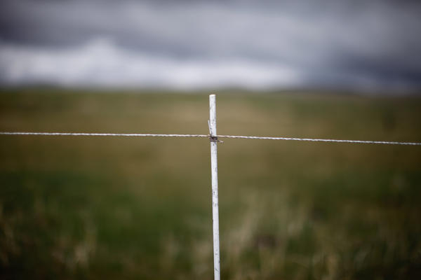 This electrified cattle fence is a grouse-friendly alternative to traditional barbed wire fences. The single-wire fences can be moved and removed easily, and the grouse are less likely to fly into them.