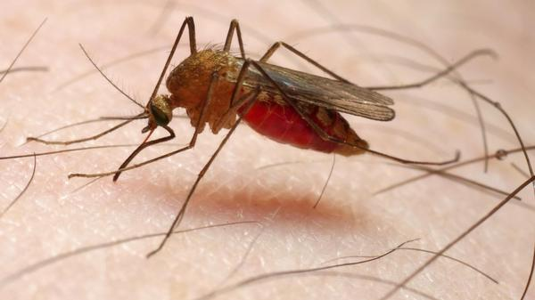 Many criteria — from blood type to body temperature — can play a role in affecting who attracts mosquitoes.