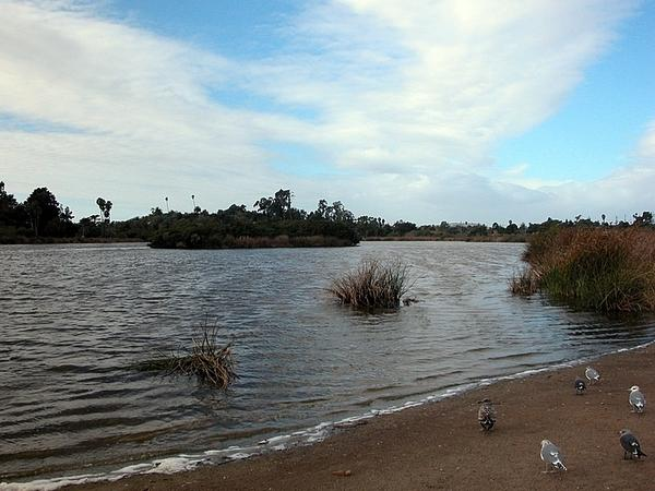 The Santa Barbara Bird Sanctuary inspired one of character Kinsey Millhone's favorite places to go jogging.