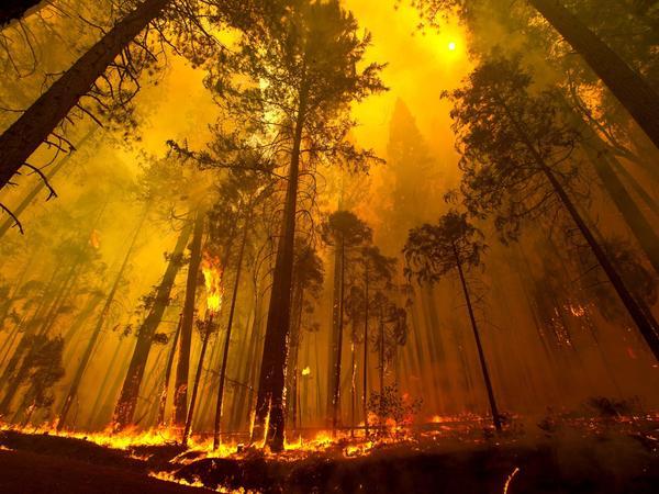 Flames burn near the Tuolumne Family Camp near Groveland, Calif., on Sunday.