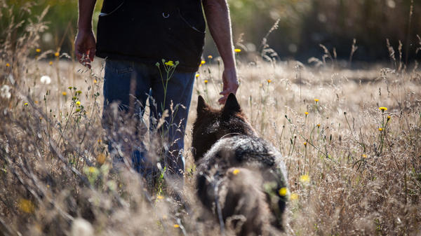 Vesely and Rogue head into the field to demonstrate the dog's ability to search for Western Pond Turtles.