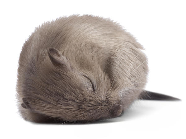 Dreaming of slimming gut microbes?