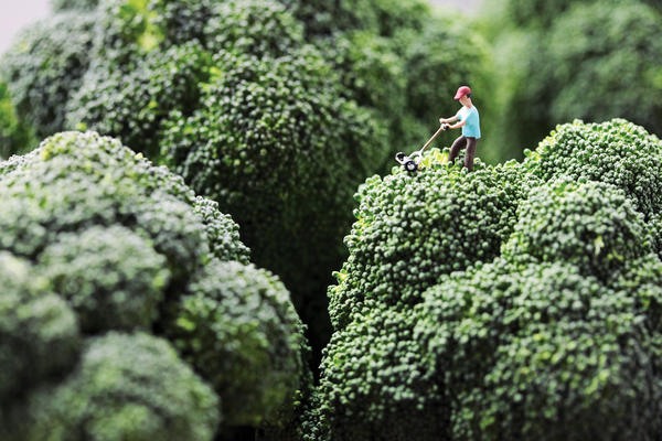 "<em>Broccoli Mower</em>: ""Douglas stubbornly refused to accept his wife's opinion that he had let the lawn go too long without attention."""