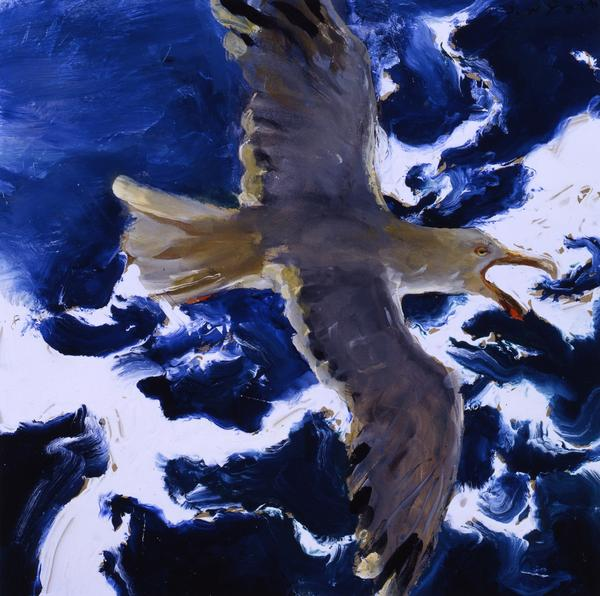 Jamie Wyeth, Gull in Flight, Shrieking, 2006/2009, Watercolor, gouache and gesso on toned rag board, 16 1/8 x 16 ¼ inches. Phyllis and Jamie Wyeth Collection, ©Jamie Wyeth