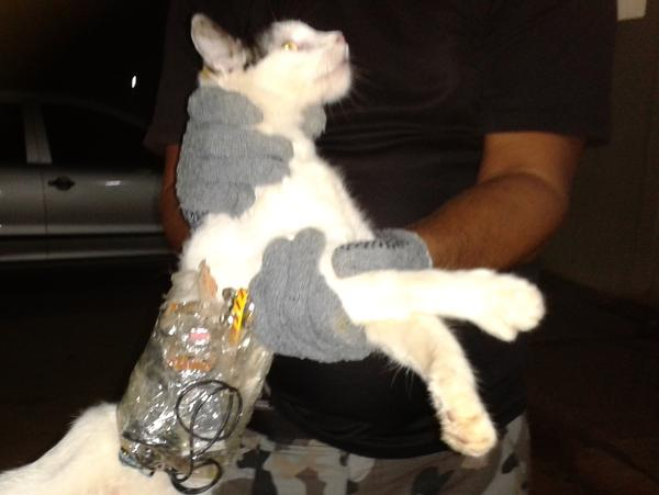 Brazil's General Superintendency of Prisons of Alagoas (SGAP) released this photo last Dec. 31 of a cat caught with contraband taped to its body at a medium-security prison in Alagoas state.