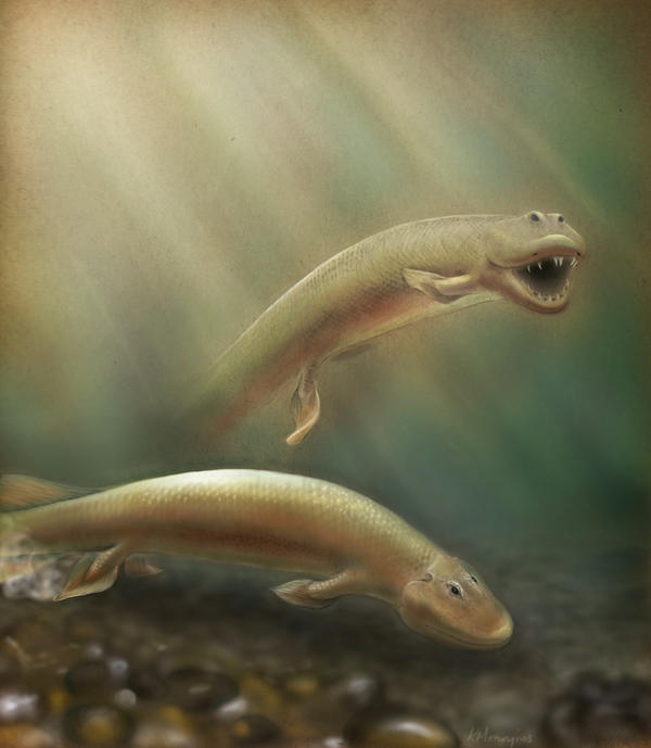 An updated rendering of <em>Tiktaalik</em> based on new research published in PNAS.