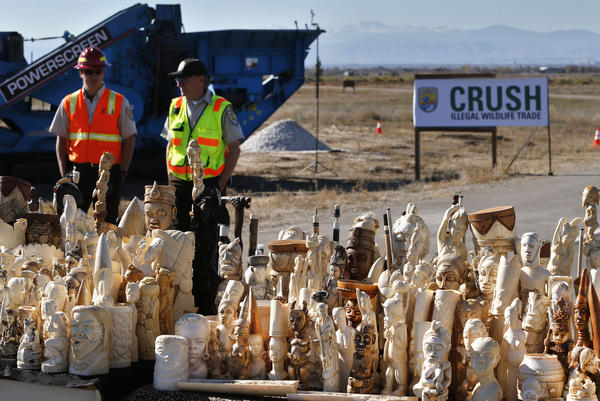 U.S. Fish and Wildlife Service officers watch over confiscated ivory prepared for crushing at the National Wildlife Property Repository, at Rocky Mountain Arsenal National Wildlife Refuge, in Commerce City, Colo., in November 2013. The six tons of banned elephant ivory destroyed was accumulated from 25 years of seizures.