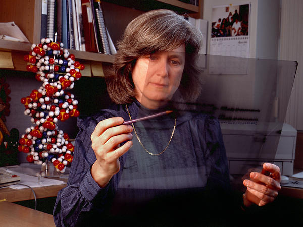 Mary-Claire King says obscurity gave her the freedom to spend years looking for breast cancer genes.