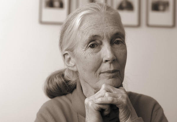 """Jane Goodall's new book """"Seeds of Hope"""" is part memoir, part history of the plant world. (David Holloway)"""
