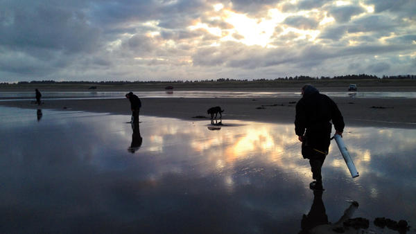 People dig for clams on Long Beach Peninsula when Washington state allows it, no matter what time of day. On this day, low tide forced clam diggers to be out before dawn.