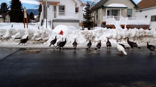 Electronic medical records help doctors and patients in Red Lodge, Mont., limit travel, which can be treacherous because of deep snow - or just wild turkeys crossing main street.