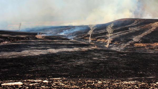 The landscape, minutes after burning.