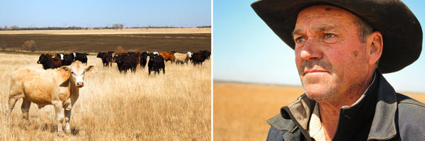 Rancher Bill Sproul depends on the tallgrass prairie for his livelihood.