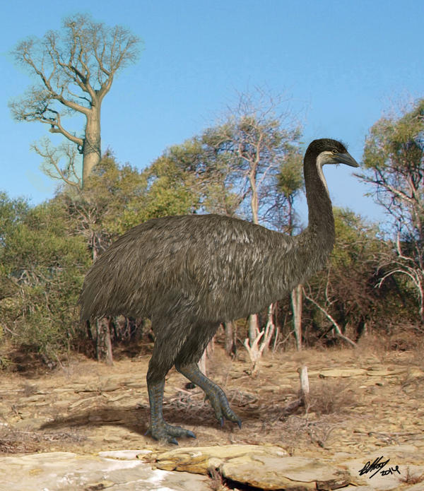"More than 6 feet tall and weighing more than 500 pounds, the now-extinct ""elephant bird"" ran through the spiny forests of ancient Madagascar. DNA evidence suggests New Zealand's kiwi is its closest modern cousin."