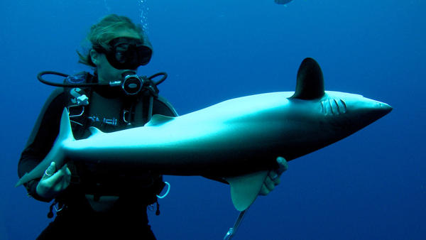 Madison Stewart holding silky shark in 'tonic immobility.' (Andy Casagrande/Kaufmann Productions Pty Ltd)