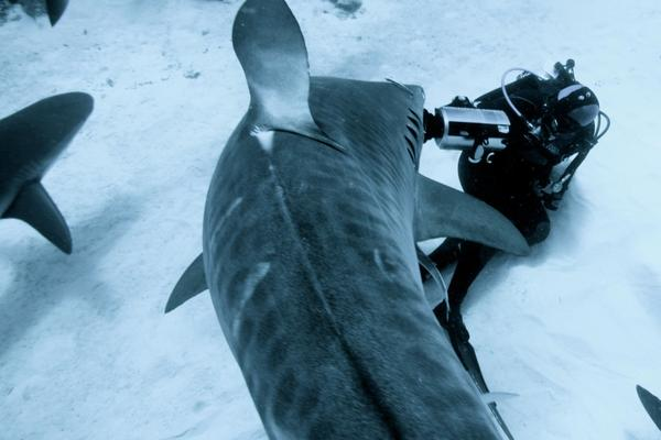 Madison Stewart, Shark Girl. (Ernst Stewart)