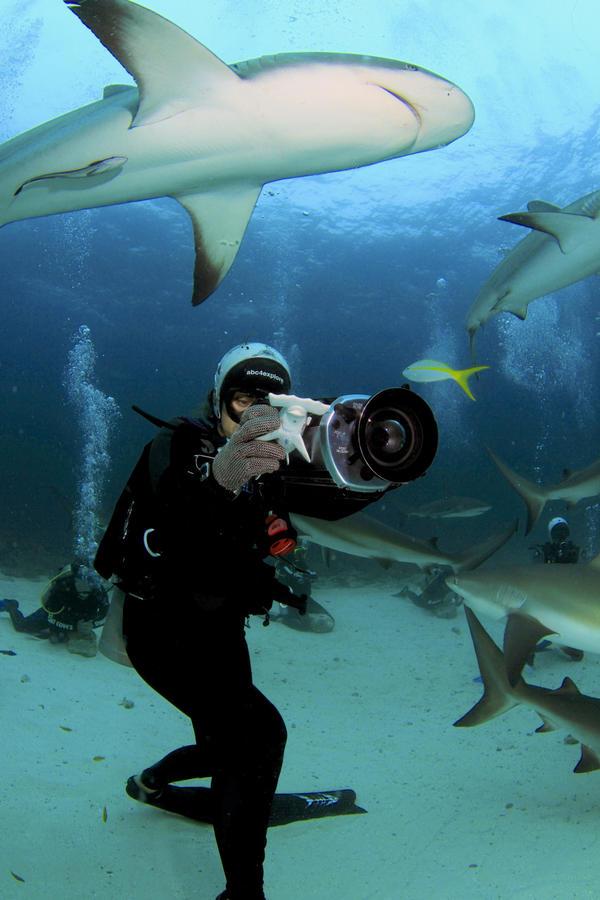 Madison Stewart filming Caribbean reef sharks. (Ernst Stewart)