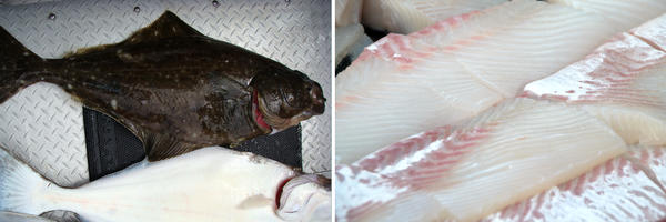 Pacific halibut from Cook Inlet, Alaska; Pacific halibut fillet from Seldovia, Alaska.