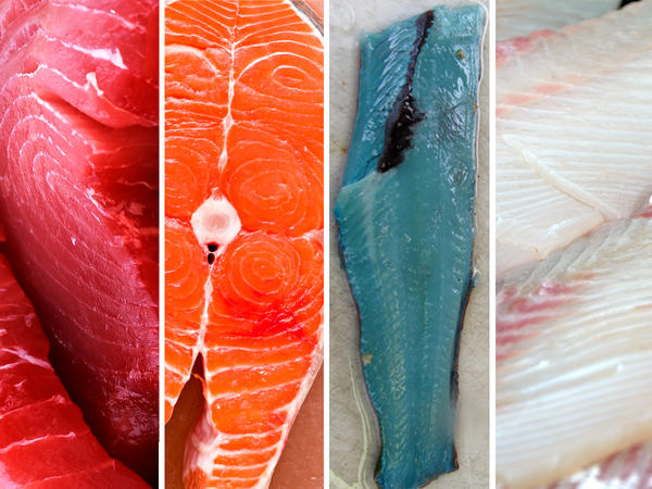 Yellowfin tuna; Chinook salmon; lingcod; Pacific halibut.