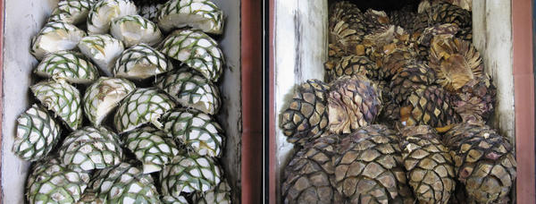 <em>Piñas</em> are piled into the ovens at La Alteña Distillery in the highlands of Jalisco, before (left) and after being roasted, and before their juice has been fermented and distilled into tequila.