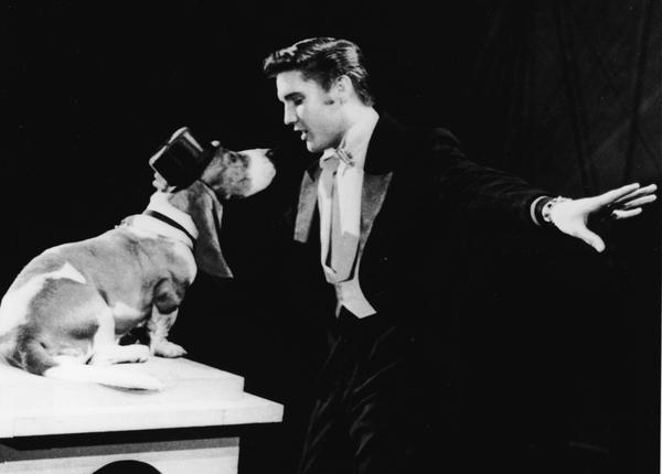 """American rock singer Elvis Presley serenades a basset hound in a top hat with the song, """"Hound Dog"""" on the set of """"The Steve Allen Show"""" in July 1956. (NBC Television/Getty Images)"""