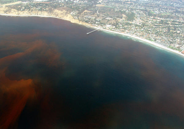 A red tide off the coast of La Jolla San Diego, California. (Mortadelo2005/Wikimedia Commons)